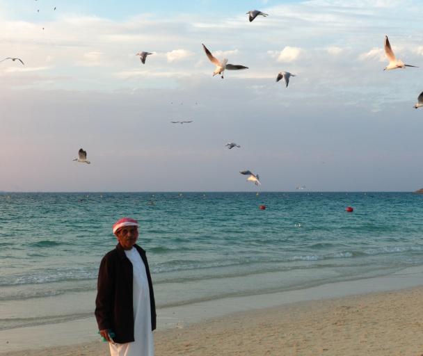 Dubai gulls