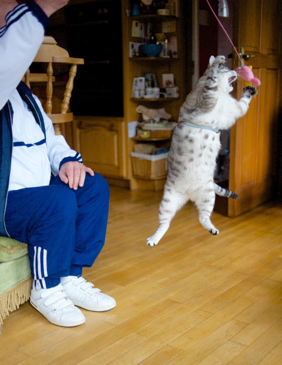Lester exercising
